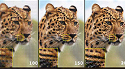 successive photos of a cheetah with a patch of the image generated by a machine learning algorithm