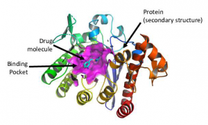 An example of a ligand-receptor complex with PDB code 1q63 from the PBDBbind database